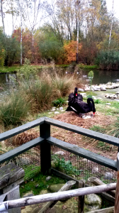 These two black swans were a couple. He was minding the eggs and she was very grumpy.